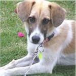 愛犬オレンジ専用のウェルカムボード