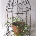 Birdcage(鳥かご)